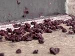 Oklahoma City Gay Club Vandalized With Soup, Blueberries